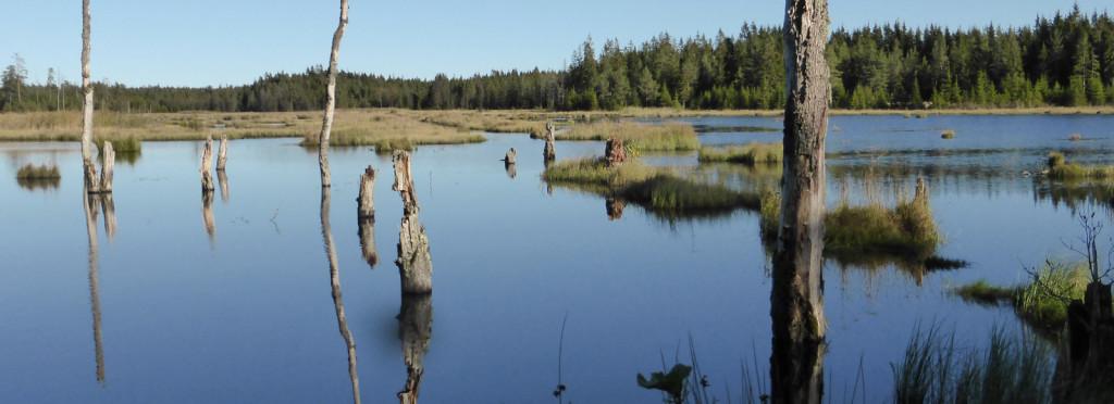 Hunneberg_fågelsjön