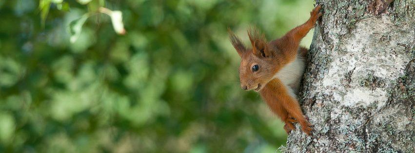 Naturfotogruppen_ekorre_Ingvar_Eliasson_20170621_01
