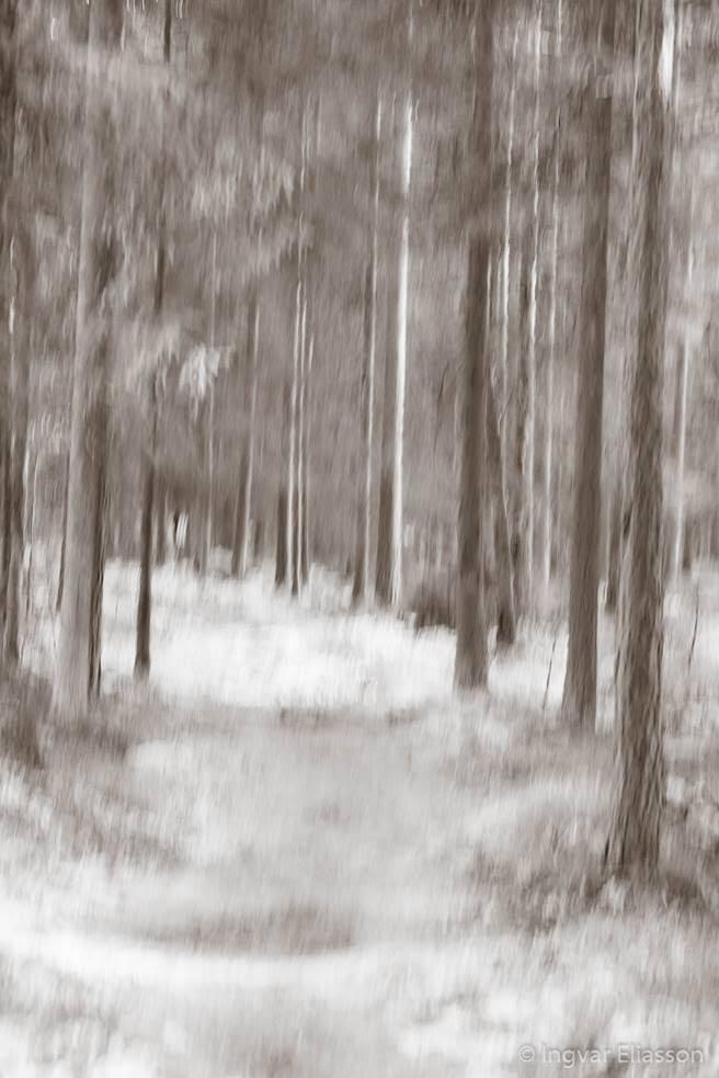 Skog suddig ljussättning fotograf Ingvar Eliasson