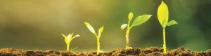 nygrodda små plantor